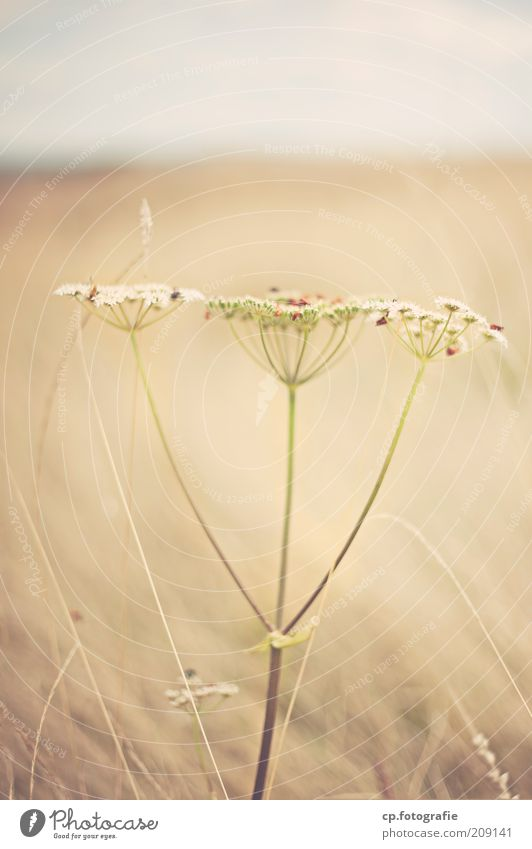 - Natur Pflanze Sommer Tier Wiese Blüte Gras Feld Tiergruppe Flügel Insekt natürlich Stengel Wildtier Schönes Wetter Käfer