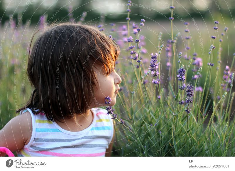kleines Mädchen im Lavendelgarten Mensch Kind Ferien & Urlaub & Reisen Erholung ruhig Freude Leben Lifestyle Innenarchitektur Gefühle Familie & Verwandtschaft