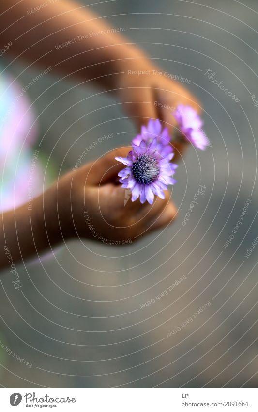 Geschenk Lifestyle Stil Design exotisch Freude schön Wellness Leben harmonisch Wohlgefühl Zufriedenheit Sinnesorgane Erholung ruhig Meditation Duft Handarbeit