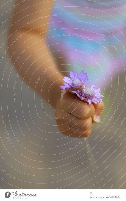 lila Blumen als Geschenk Lifestyle Freude Wellness Leben harmonisch Wohlgefühl Zufriedenheit Sinnesorgane Erholung ruhig Meditation Duft Häusliches Leben