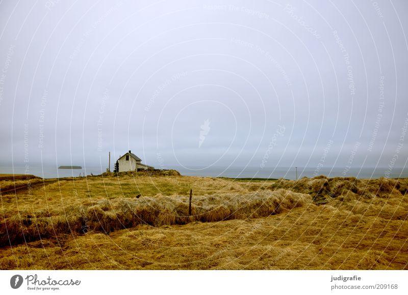 Island Umwelt Natur Landschaft Gras Hügel Küste Meer Haus Hütte Gebäude einzigartig natürlich wild Stimmung Einsamkeit Idylle ruhig Unbewohnt Farbfoto