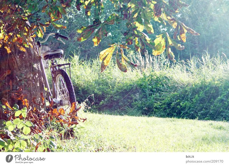 i want to ride my bicyclette Natur Baum Pflanze Ferien & Urlaub & Reisen Blatt ruhig Herbst Wiese Landschaft Gras Zufriedenheit Fahrrad Pause Sträucher