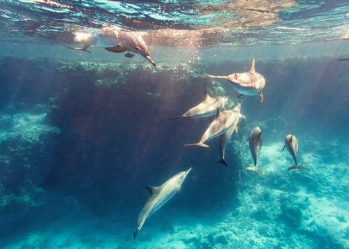 Delfine im Riff Natur blau Wasser Meer Tier Beleuchtung natürlich Spielen wild mehrere Wildtier Tiergruppe tauchen Strahlung toben