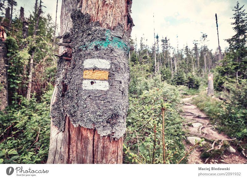 Bergpfad. Ferien & Urlaub & Reisen Tourismus Ausflug Abenteuer Expedition Camping Sommerurlaub Berge u. Gebirge wandern Natur Regen Baum Wald Wege & Pfade