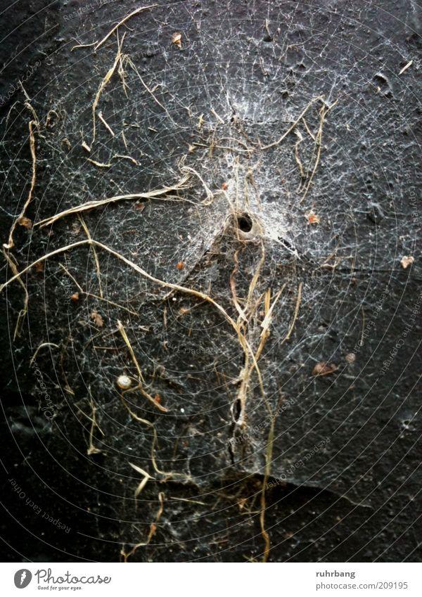 Zeitspuren Natur Pflanze Wand natürlich Loch Falle Moos Spinnennetz Öffnung Netz organisch Spinngewebe