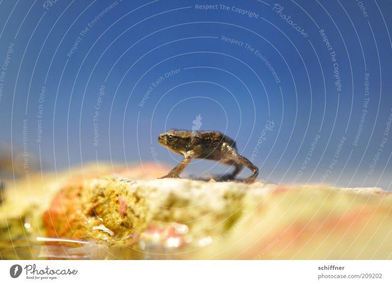 Horst zwinkert Tier Frosch 1 Tierjunges stehen Freundlichkeit klein lustig Sympathie winzig Einsamkeit Nahaufnahme Makroaufnahme Tierporträt Blauer Himmel