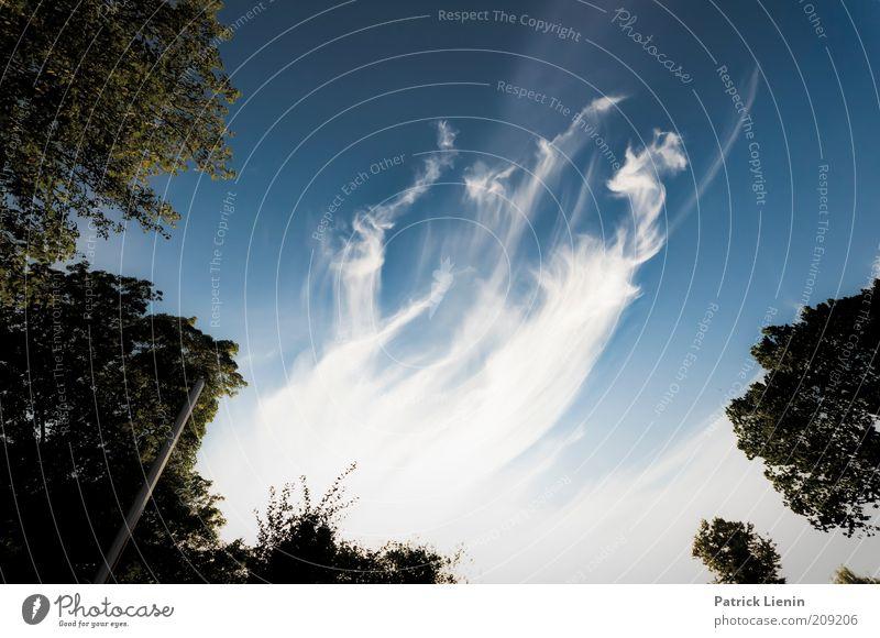 smoky trees Umwelt Natur Landschaft Pflanze Urelemente Luft Himmel Wolken Sommer Klima Klimawandel Wetter Schönes Wetter Wind Baum atmen Denken genießen