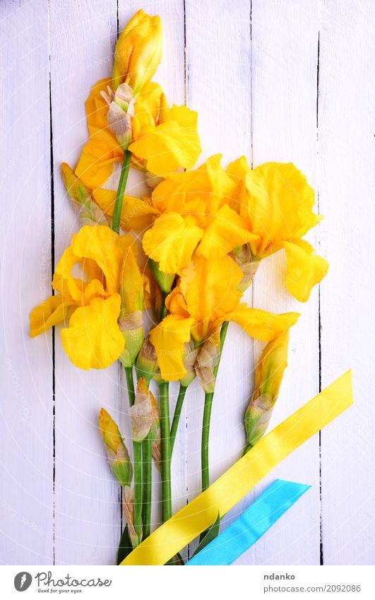 Bouquet von blühenden gelben Schwertlilien schön Sommer Feste & Feiern Ostern Blume Blatt Blüte Blumenstrauß Holz Blühend frisch hell blau weiß Farbe