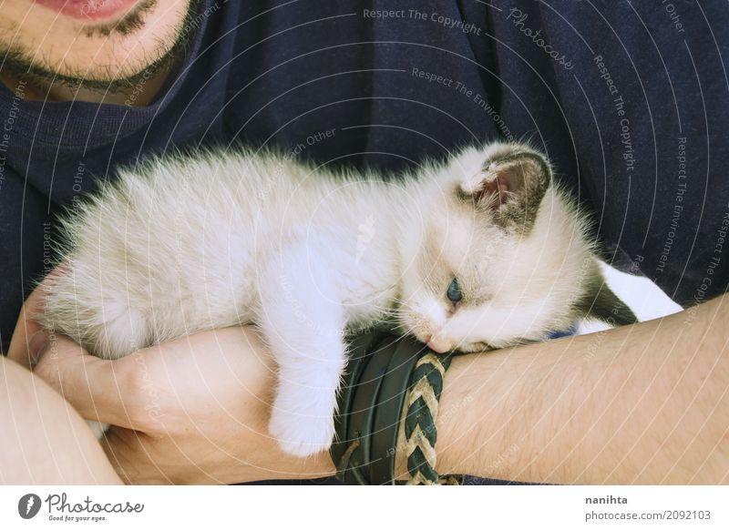 Kleines Kätzchen müde und liegend über den Arm eines Mannes Mensch maskulin Junger Mann Jugendliche 1 18-30 Jahre Erwachsene Tier Haustier Katze Tierjunges