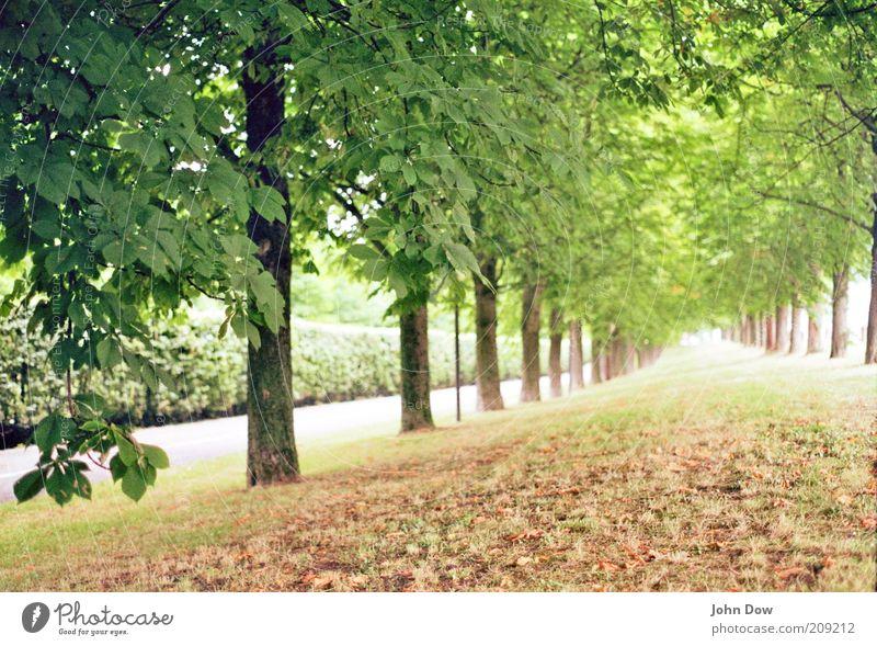 Die unendliche Geschichte Natur Baum Pflanze Blatt ruhig Ferne Landschaft Gras Wege & Pfade Park Ordnung frisch Sträucher Hoffnung Schönes Wetter Unendlichkeit
