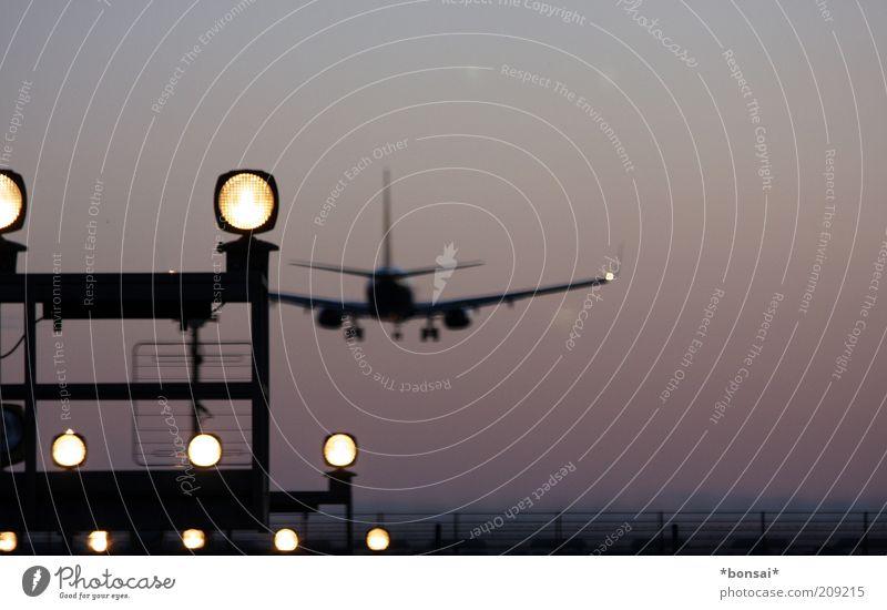 flying Himmel Ferien & Urlaub & Reisen dunkel oben Bewegung hell Flugzeug elegant fliegen groß Schilder & Markierungen Verkehr hoch Sicherheit Luftverkehr Tourismus