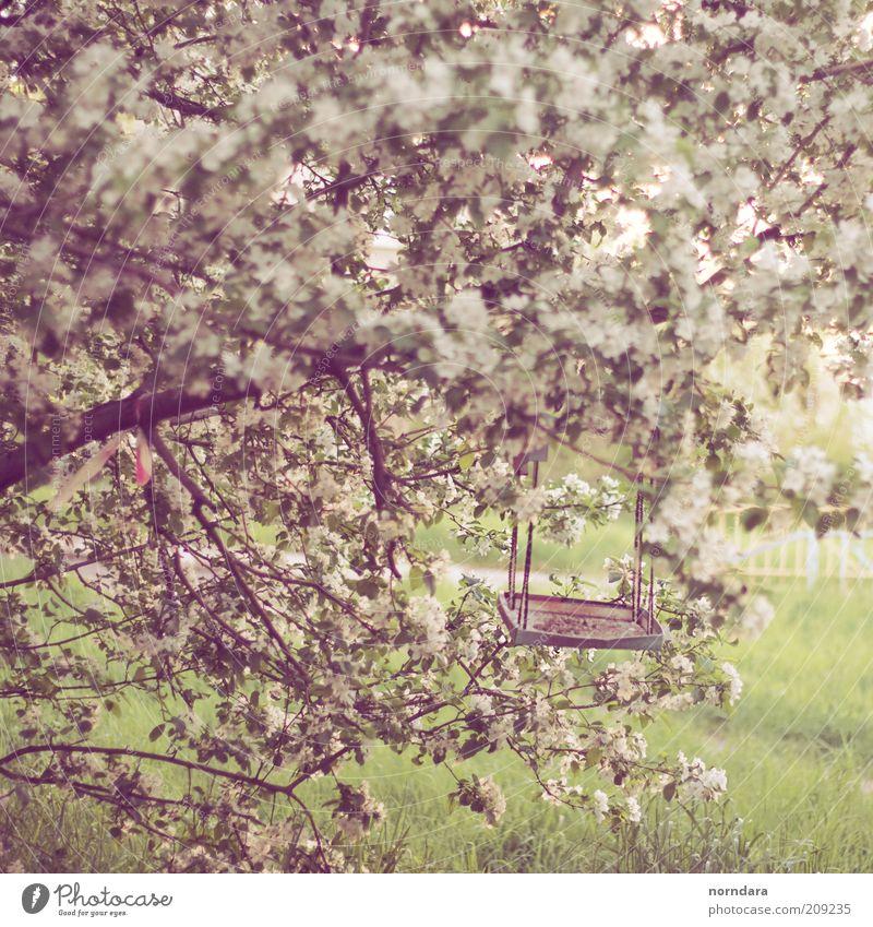 Natur grün Pflanze Sonne Farbe Erholung Gefühle Gras Blüte Frühling Stimmung Park Zufriedenheit Vogel wild Russland