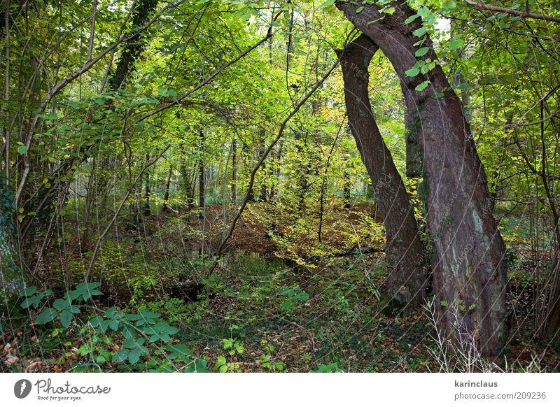 Herbstwald Umwelt Natur Landschaft Pflanze Baum Blatt Park Wald braun gelb grün fallen Hintergrundbild orange Saison Oktober November farbenfroh multi organisch