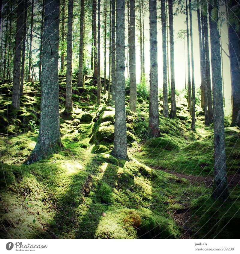 Sonnenmoos im Wald Natur alt Baum grün Pflanze Sommer ruhig dunkel Herbst Gras Frühling Holz Landschaft Umwelt Erde