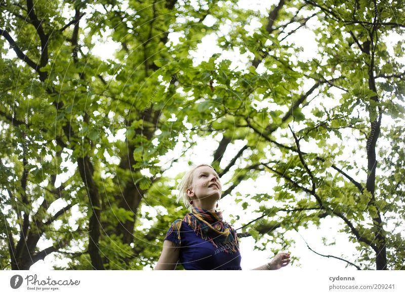 Über mir Natur Jugendliche grün schön Baum ruhig Wald Leben Freiheit Landschaft Umwelt Bewegung Glück Frühling träumen Erwachsene