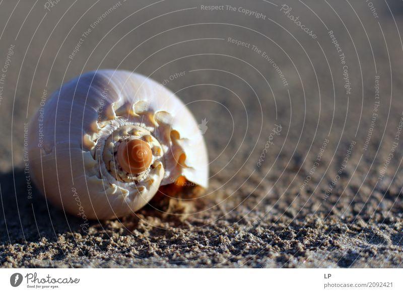 Muschel Spirale Ferien & Urlaub & Reisen Meer Erholung ruhig Strand Leben Lifestyle Gefühle Küste Stil Sand Design Häusliches Leben Freizeit & Hobby