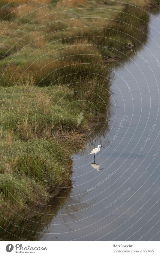 Warteposition Natur Pflanze grün Wasser Landschaft Einsamkeit Tier ruhig Umwelt natürlich Gras grau Vogel stehen warten Gelassenheit