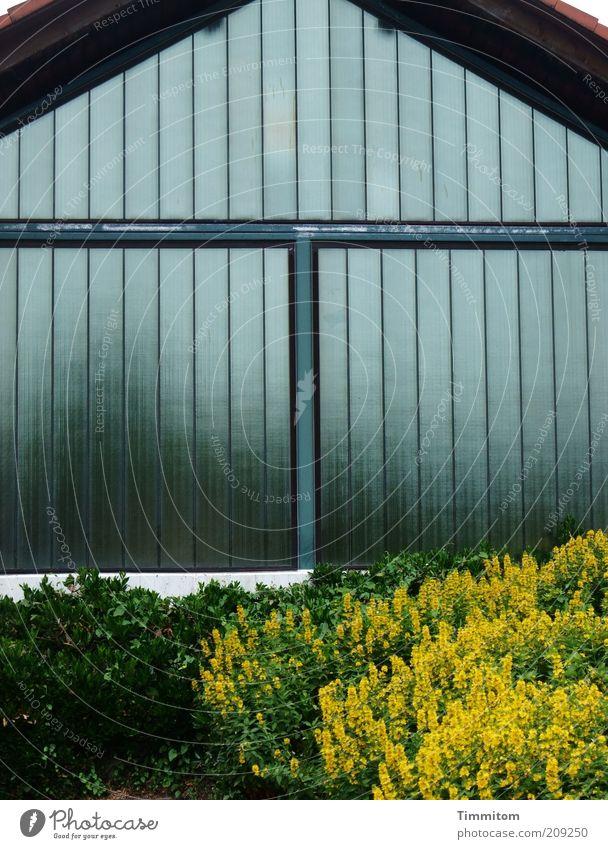 T auf Glas Blume grün Pflanze gelb Gebäude Zufriedenheit glänzend Glas Ordnung ästhetisch Sträucher Schriftzeichen einfach fest Fensterscheibe eckig