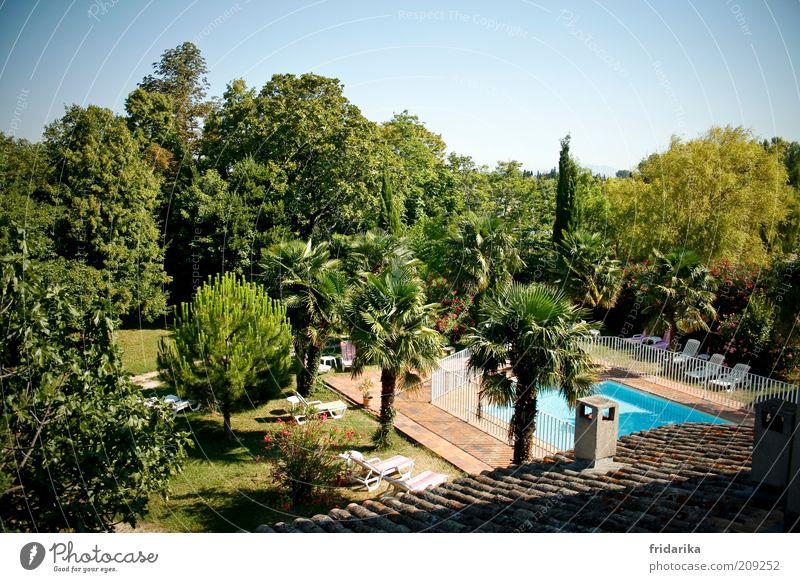 so kann der tag beginnen Ferien & Urlaub & Reisen Tourismus Garten Wolkenloser Himmel Sommer Schönes Wetter Baum exotisch Palme Oase Schwimmbad Terrasse Dach