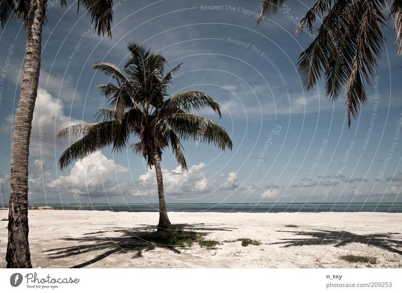 Ausgesetzt Ferien & Urlaub & Reisen Ausflug Ferne Freiheit Expedition Sommer Strand Meer Insel Umwelt Natur Landschaft Sand Wasser Palme Indischer Ozean