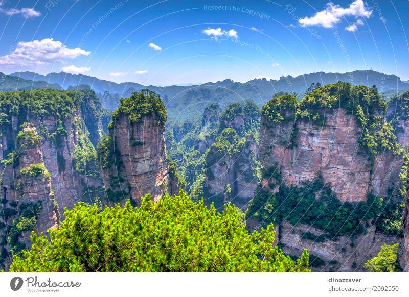Sandsteinspalten in Nationalpark Zhangjiajie, China schön Ferien & Urlaub & Reisen Tourismus Sightseeing Berge u. Gebirge Natur Landschaft Erde Himmel Baum Park