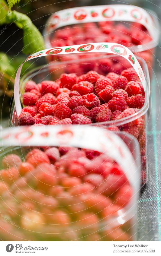 Frische saftige Orgaic Raspberies in Plastikkästen Natur Sommer rot Essen natürlich Frucht Ernährung frisch Tisch Schutz Jahreszeiten Bauernhof Tradition