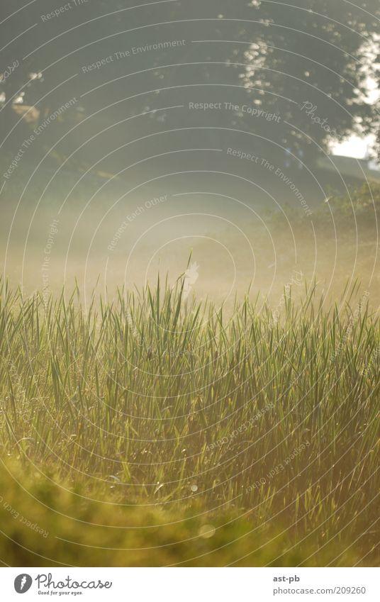 Morgennebel Umwelt Natur Pflanze Erde Luft Sonne Sonnenaufgang Sonnenuntergang Sonnenlicht Schönes Wetter Nebel Gras Hügel Flussufer Nowgorod Russland braun
