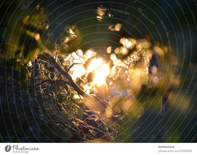 Lebenselixier l Sonne Natur Urelemente Sommer Klima Pflanze Sträucher Garten leuchten hell Gefühle Stimmung Lebensfreude Warmherzigkeit Energie Kraft