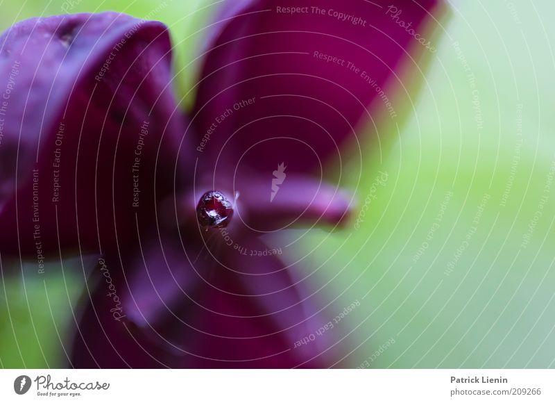 strange blossom Natur schön Pflanze Blüte Frühling Umwelt authentisch violett natürlich fangen Blühend Duft exotisch Tiefenschärfe Staubfäden