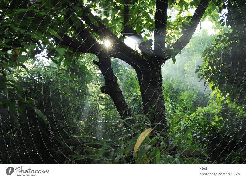 Grillsaison Umwelt Natur Sonne Baum Wald grau grün Rauch Sonnenstrahlen Blätterdach Farbfoto Außenaufnahme Tag Abend Nebel Baumstamm Sträucher Grünpflanze
