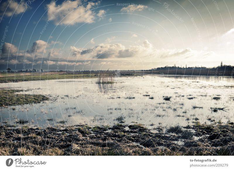 give me Moor Ferne Umwelt Natur Landschaft Pflanze Urelemente Erde Wasser Himmel Wolken Horizont Schönes Wetter Wiese Sumpf Teich Moorsee Sumpflandschaft