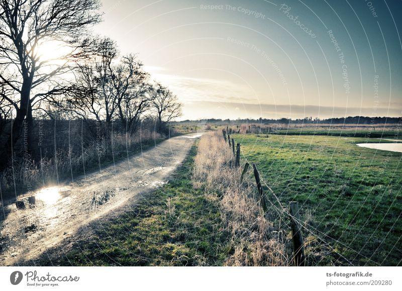 kein Weg zurück Umwelt Natur Landschaft Pflanze Urelemente Erde Wasser Himmel Wolkenloser Himmel Horizont Herbst Wetter Schönes Wetter Baum Wiese Moor Sumpf