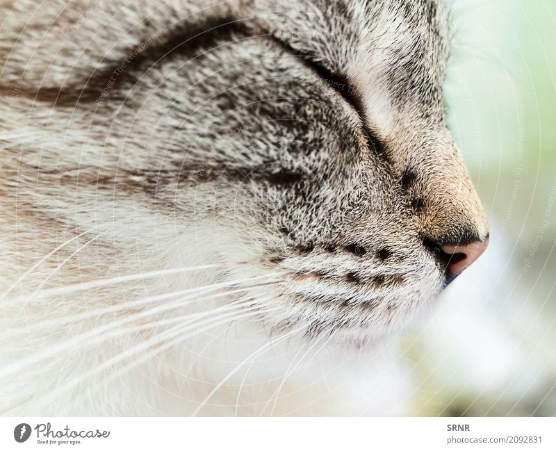 Katze Gesicht Freundschaft Tier kurzhaarig Haustier niedlich Tiere fleischfressend heimisch Hauskatze domestiziert Auge glücklich Säugetier Nase Muschi Schnauze