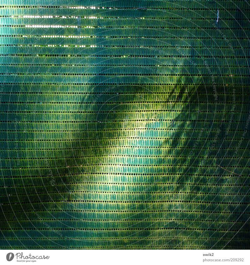 Grüne Grenze Natur Baum grün blau Pflanze Sommer Wand Wärme Wetter Umwelt Fassade modern einfach Klima einzigartig