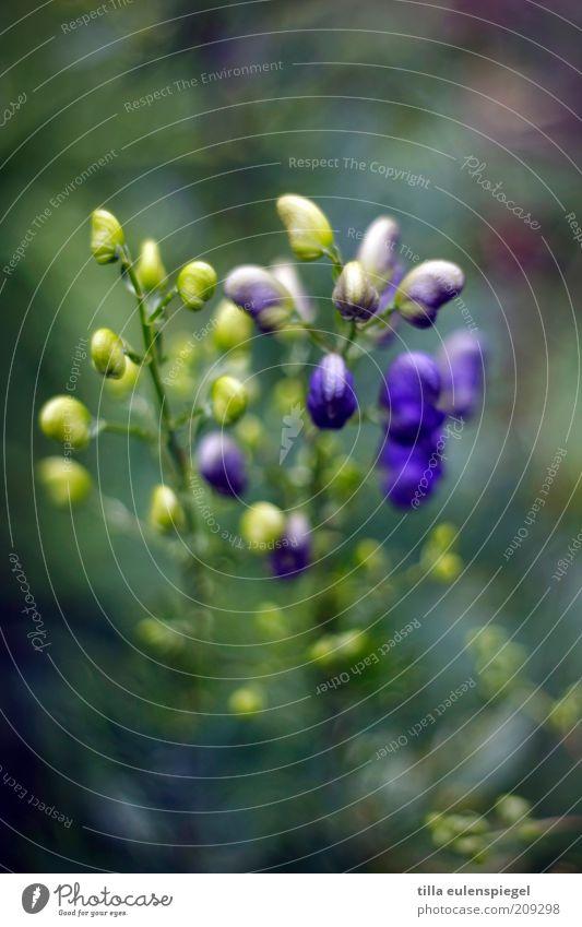 bokehlicious Natur schön Blume blau Pflanze Sommer gelb Umwelt ästhetisch Wachstum violett wild natürlich außergewöhnlich Unschärfe biologisch