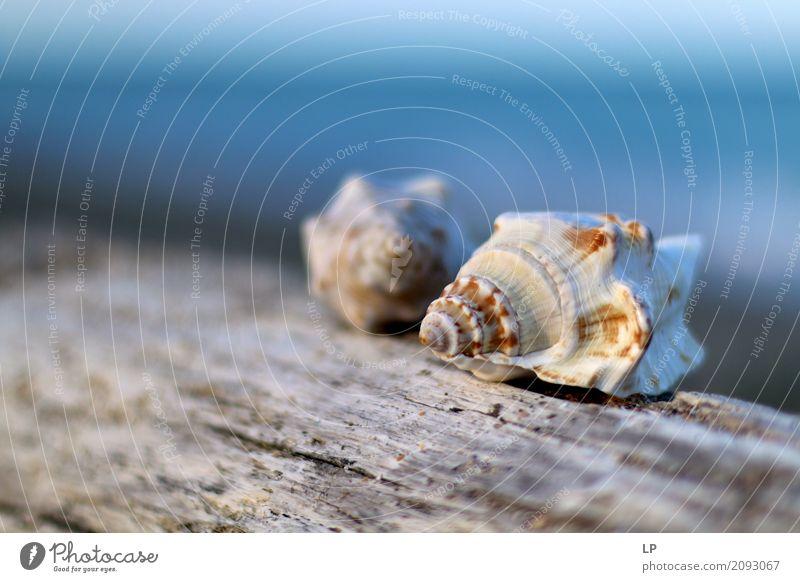 Muscheln Himmel Natur Ferien & Urlaub & Reisen Meer Erholung ruhig Strand Leben Innenarchitektur Gefühle Freiheit Paar Tourismus Häusliches Leben Zufriedenheit