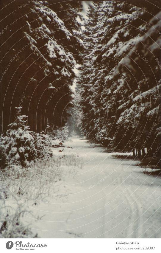 Analoger Wintertraum II Natur Winter Einsamkeit Ferne Wald kalt Schnee Gefühle Wege & Pfade Eis Zufriedenheit Stimmung Wetter Umwelt ästhetisch Frost