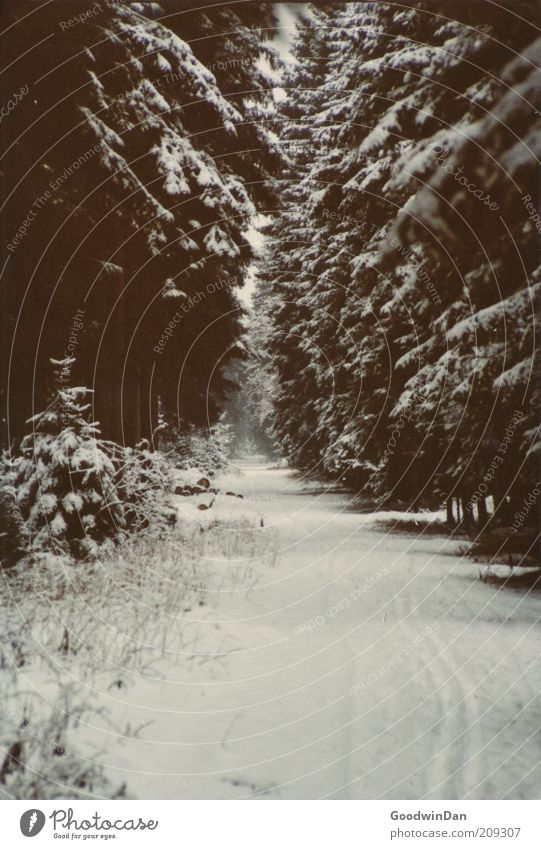 Analoger Wintertraum II Umwelt Natur Urelemente Wetter Schönes Wetter Eis Frost Schnee Wald ästhetisch außergewöhnlich authentisch Ferne Unendlichkeit kalt