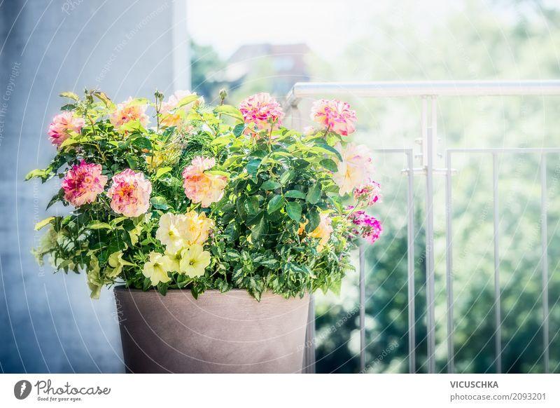 Blumentopf mit Rosen, Petunien und Verbenen auf Balkon Lifestyle Stil Design Sommer Häusliches Leben Haus Garten Dekoration & Verzierung Natur Pflanze Blatt