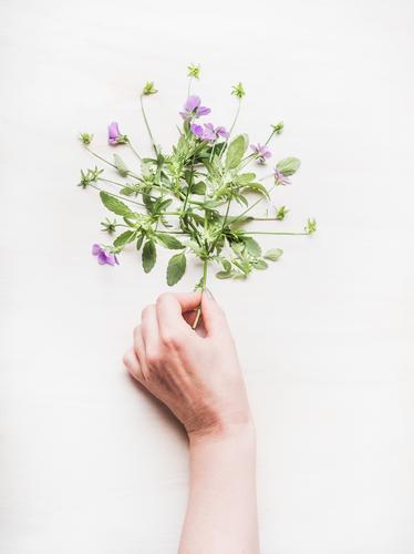 Weibliche Hand hält Blumen Lifestyle Stil Design Freizeit & Hobby Garten Feste & Feiern Mensch feminin Frau Erwachsene Natur Pflanze Frühling Sommer Blatt Blüte