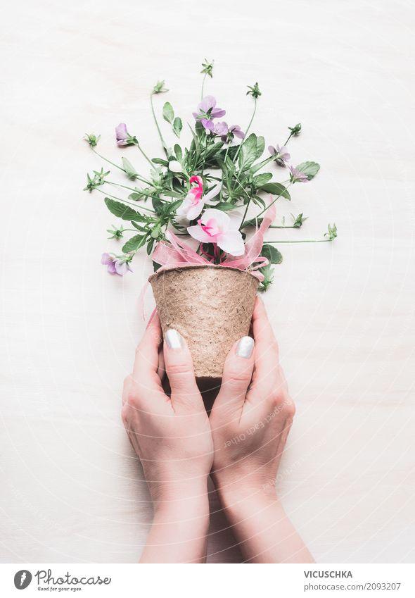 Weibliche Hände halten Blumen Topf Lifestyle Stil Design Leben Freizeit & Hobby Sommer Garten Dekoration & Verzierung Tisch Valentinstag Muttertag Hochzeit