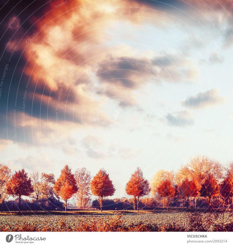 Herbstlandschaft mit Bäumen, Feld und Himmel Lifestyle Design Sommer Natur Landschaft Schönes Wetter Baum Wiese gelb Hintergrundbild Sonnenuntergang Blatt