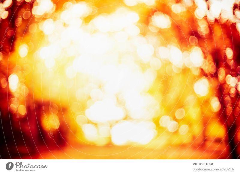 Verschwommenes Herbstlaub Stil Design Sommer Natur Sonnenaufgang Sonnenuntergang Sonnenlicht Schönes Wetter Pflanze Blatt Garten Park Wald weich gelb