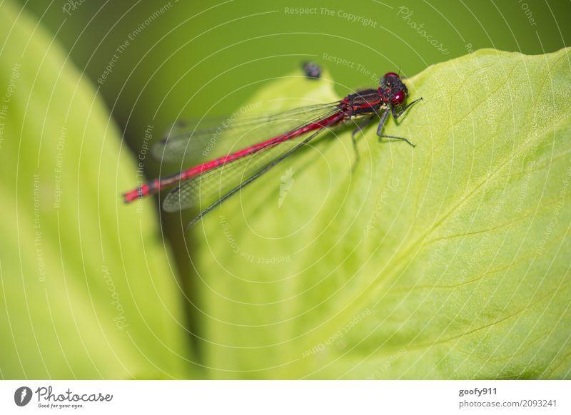 An der Kante!!! Umwelt Natur Frühling Sommer Pflanze Blatt Grünpflanze Garten Park Teich See Tier Wildtier Tiergesicht Flügel Libelle Libellenflügel 1 hängen