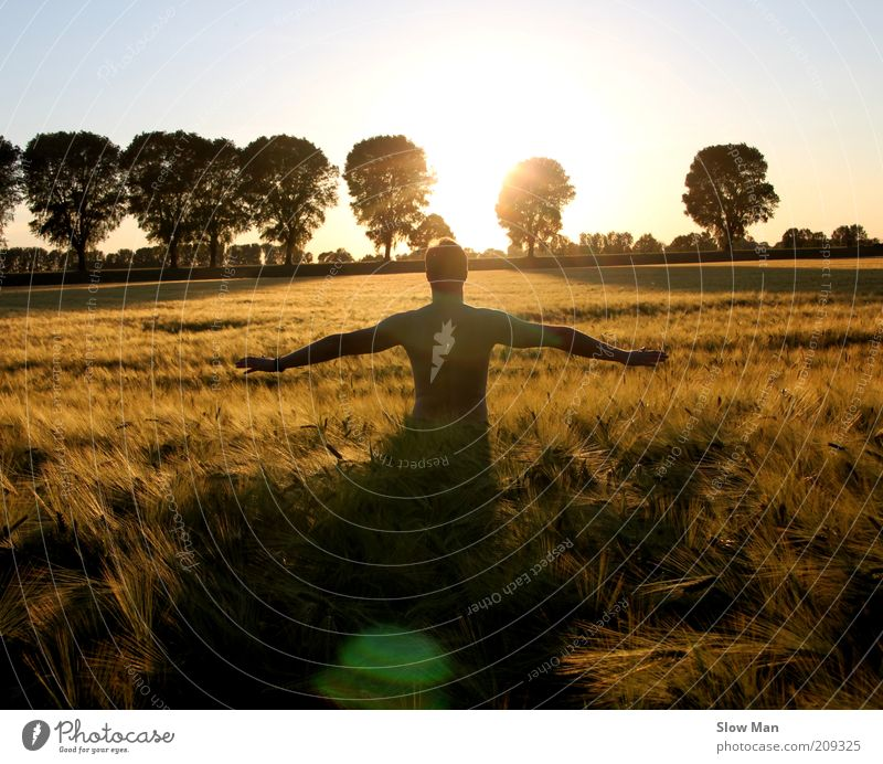 Erntezeit ... Mann Sonne Sommer ruhig Erwachsene Erholung Freiheit Glück Kraft Feld gold Rücken Arme natürlich maskulin frei