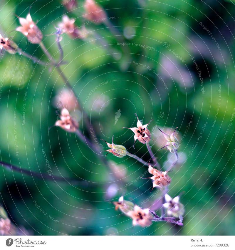 Hoffnung Natur grün Pflanze Sommer rosa ästhetisch authentisch Wandel & Veränderung Vergänglichkeit zart trocken Zweig zierlich Vogelperspektive Landleben