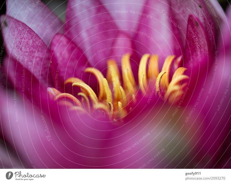 Blüte Umwelt Natur Landschaft Pflanze Tier Wasser Frühling Sommer Schönes Wetter Blume Rose Blatt Grünpflanze Nutzpflanze Wildpflanze Garten Park Teich See
