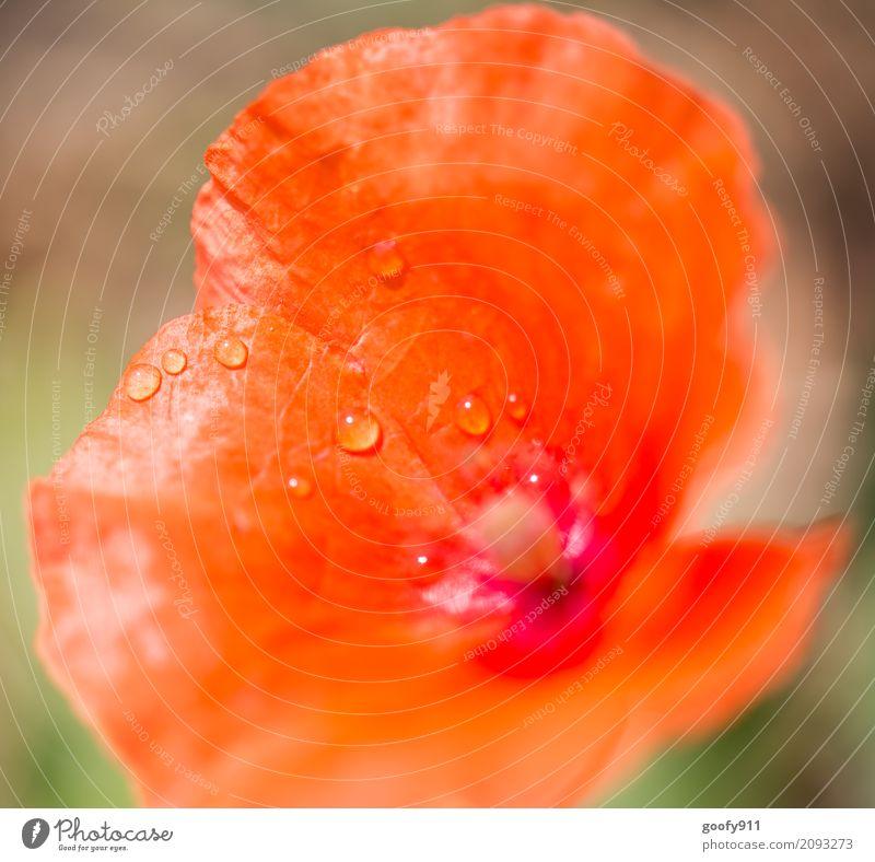 Nach dem Regen Umwelt Natur Landschaft Pflanze Tier Wasser Wassertropfen Sonnenlicht Frühling Sommer Schönes Wetter Blume Blatt Blüte Wildpflanze Garten Park