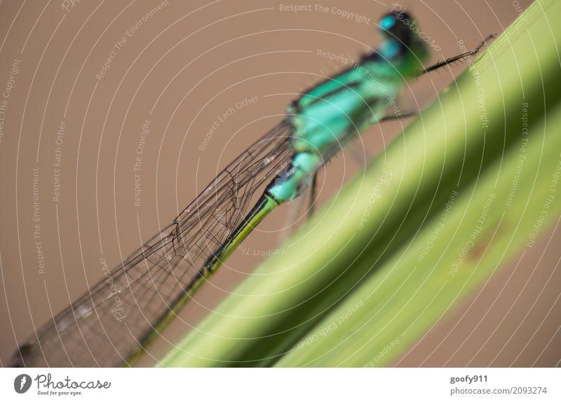 Etwas zu schnell ;-))) Umwelt Natur Landschaft Frühling Sommer Pflanze Gras Sträucher Garten Park Wiese Teich See Tier Wildtier Tiergesicht Flügel Libelle