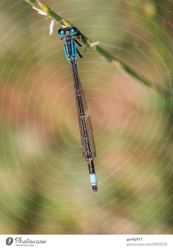 Einfach mal abhängen!!! Natur Pflanze blau Sommer schön grün Landschaft Tier Umwelt Frühling Wiese natürlich Gras Garten See Park